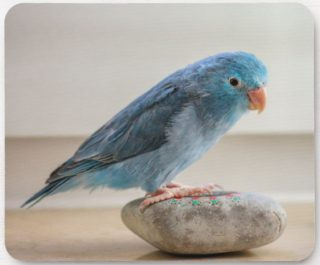 Little Blue Bird Mouse Pad